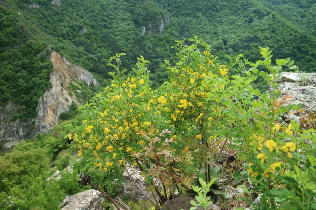 Nature in Middle Rhodope Mountains is magnificent