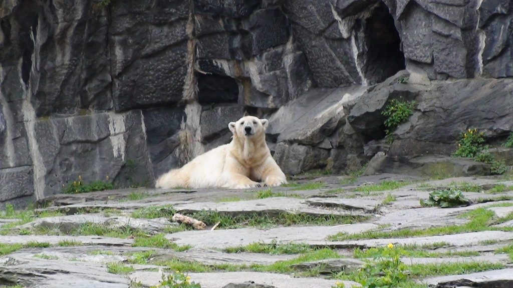 What to see in Berlin - the Berlin Zoo